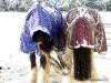 snow-ponies2